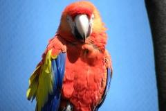 Papegaai te Blijdorp