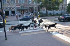 Met fiets honden uitlaten