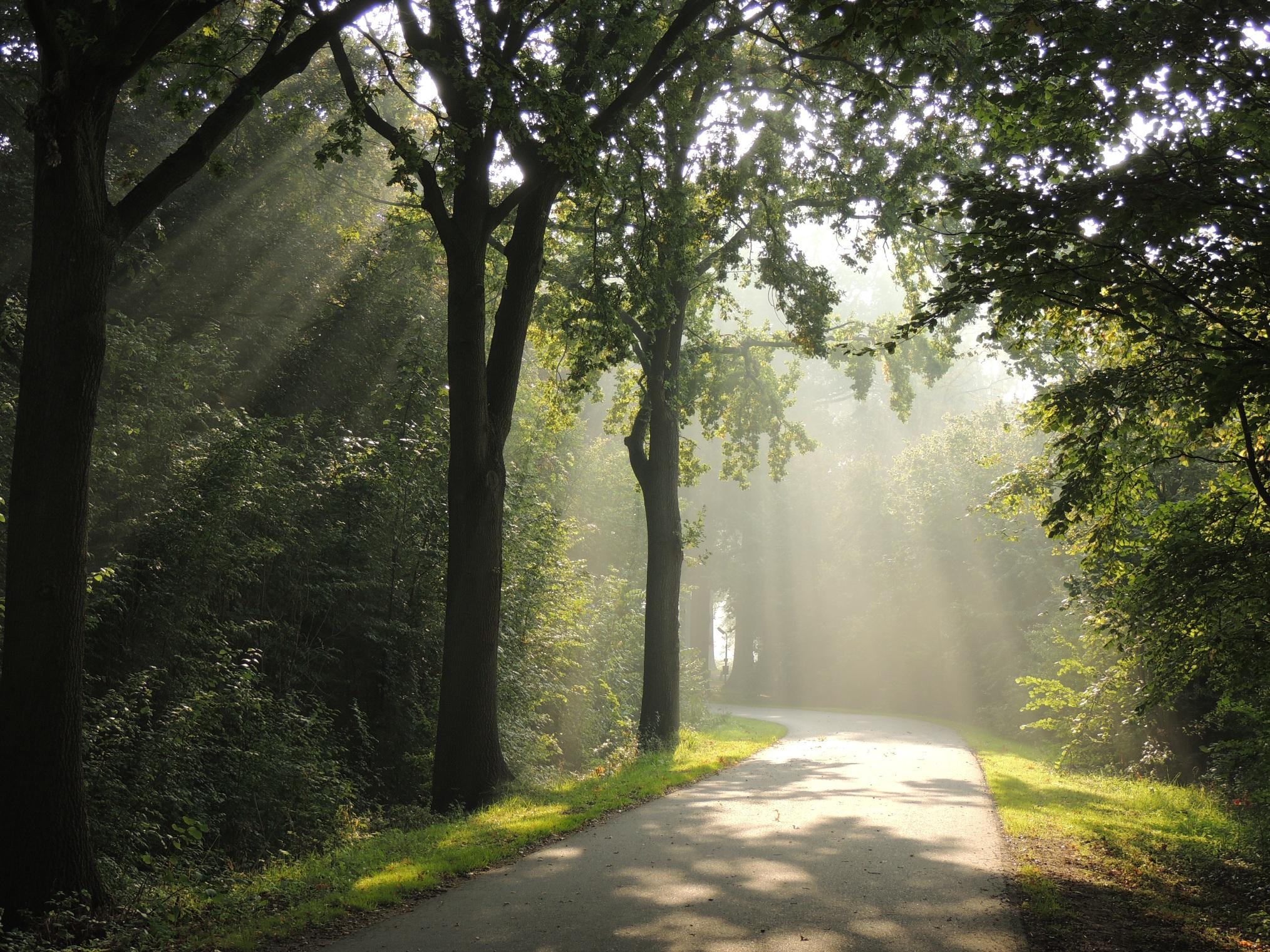 Lichtstralen vangen bij Rhijnauwen