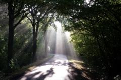 Zonnestralen vangen bij Rhijnauwen