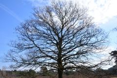 Stamboom lijkende boom