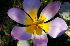Fraaie bloem