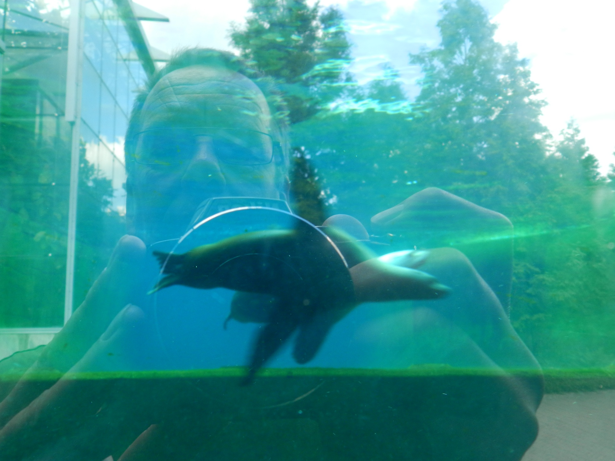 Selfie en zeeleeuw tegelijk in beeld