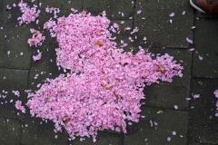 Voorjaarssneeuw door bloesem blaadjes