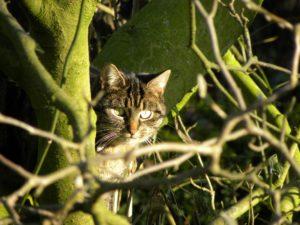 Kat uit boom