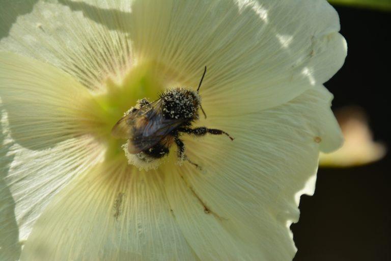 Insect en bloemen tuin ouders